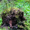 Exciting little tree stump