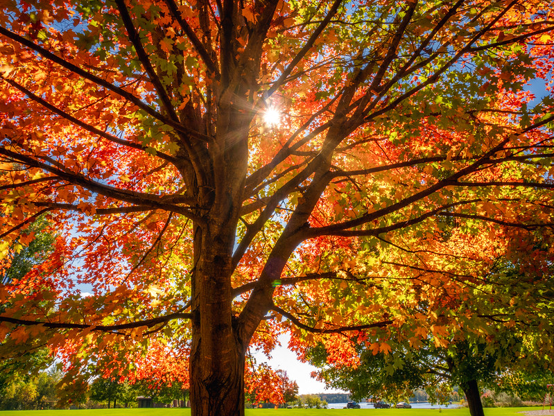 Michigan Autumn 2018