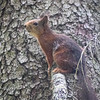 A squirrel I saw once