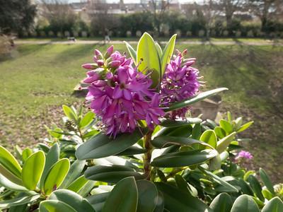 St Nicholas Rest Garden, Brighton