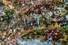 Colombia : Las algas rosadas son originarios de los llanos orientales en Colombia / Pink algae are native to the eastern plains of Colombia / Kolumbien : Rosa Algen sind in den östlichen Ebenen Kolumbiens heimisch © Ronnie Palleiro/LATINPHOTO.org