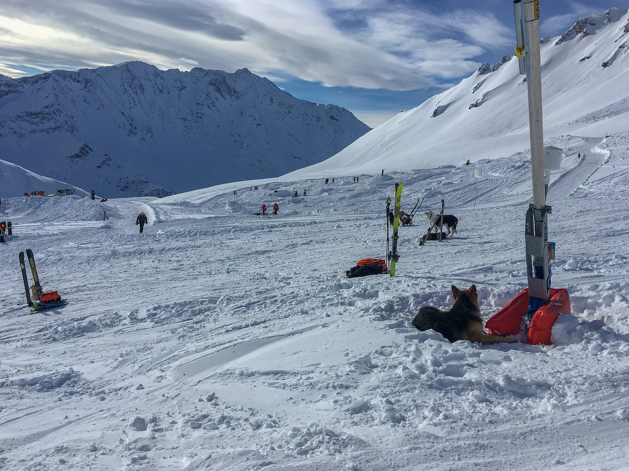 Avalanche search and rescue dogs