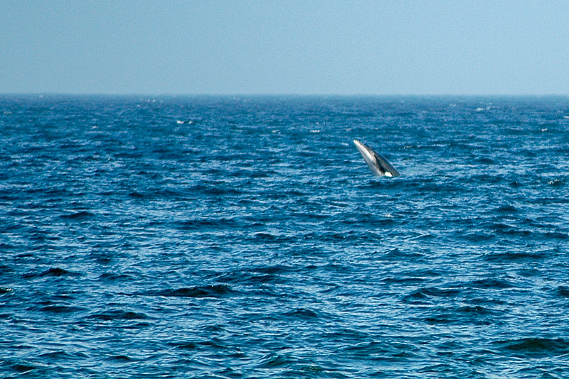 Whales in Mahone Bay, NS