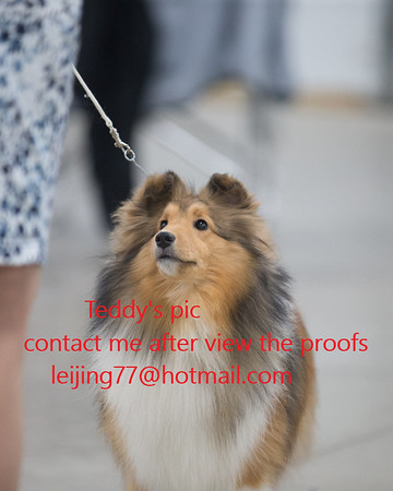 2018.05 Sheltie central indiana club