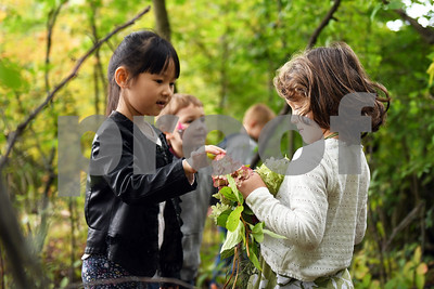 Kindergarteners Jinxi Zhang hands a flower to Savannah Massey as the pair work on building a fairy house behind the school during the annual Fall Festival at Northeast Elementary School Thursday morning.