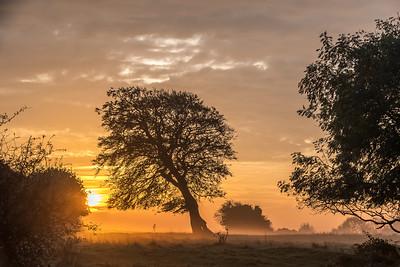 Lone Tree Runner