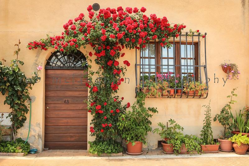 Roses Above #2 , Montepulciano , Tuscany