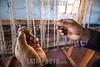 Argentina : Lana de llama en manos de una artesana de la Cooperativa de Artesanos de Rinconada , provincia de Jujuy / Llama wool in the hands of one craftswoman of the Rinconada Craftsmen Cooperative , Jujuy province / Argentinien : Lama - Wolle in den Händen einer Handwerkerin der Rinconada Craftsmen Cooperative , Provinz Jujuy © Silvina Enrietti/LATINPHOTO.org