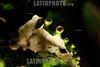 Argentina : fructicose lichen , symbiosis between algae and fungi , El Rey National Park , Salta province / Argentinien : Fruchtflechte © Silvina Enrietti/LATINPHOTO.org