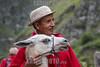 Ecuador : hombre indigena / indigenous man with lama / Ekuador : Indigener Mann mt Lama © HR Aeschbacher/LATINPHOTO.org