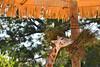 Guatemala : Jirafa en un zoológico / giraffe / Guatemala : Giraffe in einem Zoo © Jesús Alfonso/LATINPHOTO.org