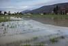 Überschwemmung nach starken Regenfällen in Oberbuchsiten - Wasser auf Ackerfeld © Patrick Lüthy/IMAGOpress