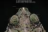 Argentina : sapo granuloso ( Rhinella granulosa ) Campo a 23 km al N del paraje Tres Palmas , Chaco / Frog ( Rhinella granulosa ) province of Chaco / Argentinien : Frosch der Gattung Rhinella granulosa © Silvina Enrietti/LATINPHOTO.org