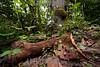 Argentina : Jungle soil , Calilegua National Park , Jujuy province / Argentinien : Urwald im Nationalpark Calilegua - Natur - Baumstamm © Silvina Enrietti/LATINPHOTO.org