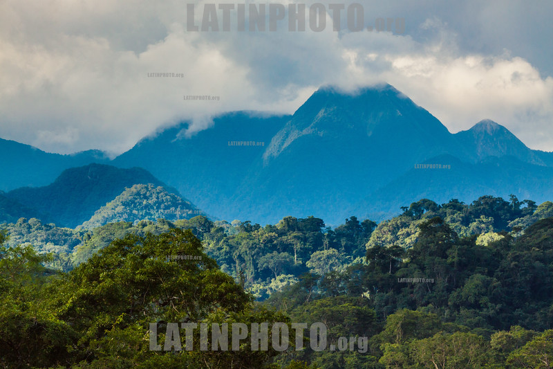 Argentina : Calilegua National Park , Jujuy province / Argentinien : Nationalpark Calilegua in der Provinz Jujuy © Silvina Enrietti/LATINPHOTO.org