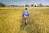 Argentina : La familia Sasaki tiene campos de producción de arroz orgánico en Monte Grande, Provincia de Buenos Aires / The Sasaki family cultivates organic rice fields in Monte Grande / Argentinien : Die Familie Sasaki pflanzt  Bio - Reisfelder in Monte Grande an © Augusto Famulari/LATINPHOTO.org
