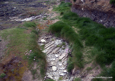 Very Thin covering of vegetation over underlying rock