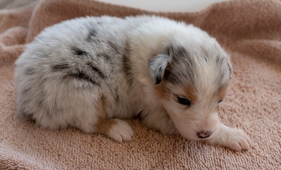 Puppy 2 Right Side