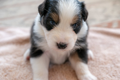 Puppy 5 Face