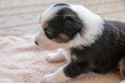 Pupp 5 Face