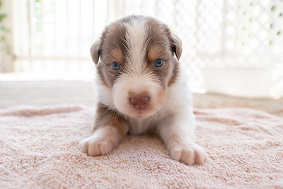 Puppy 8 Face