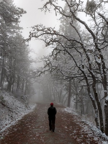 Walking under snow covered trees, Prescott Park, Oregon