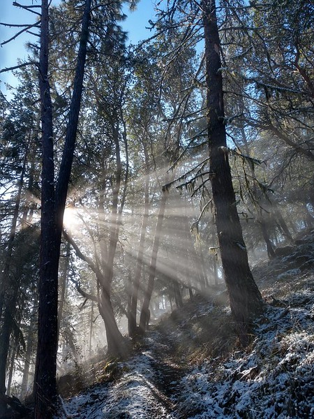 Sunshine on the snowy Ponderosa Trail, Prescott Park, Oregon