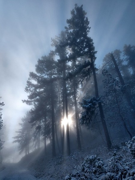 Sunshine through the fog on Tower Road, Prescott Park, Oregon