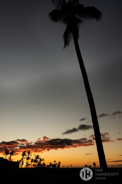 Palm Kaukaʻi