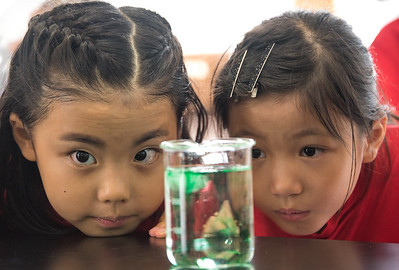 Gr  2 Science Experiment-untitled shoot-YIS_6920-2018-19
