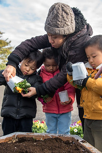 ELC Flower Planting-untitled shoot-YIS_9763-2018-19