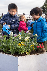 ELC Flower Planting-untitled shoot-YIS_9784-2018-19