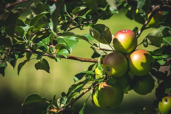 2019 UWL Apples