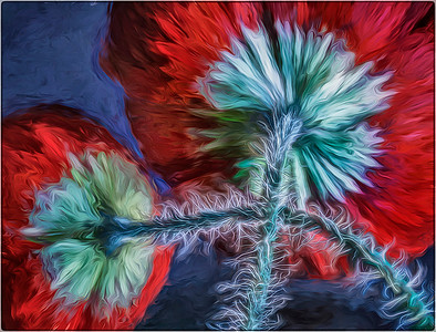 poppies - Anastasia Tompkins - PSA 7