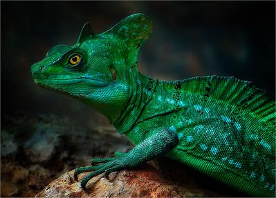 Lizard - PSA Score 8