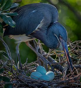 Adjusting the Nest