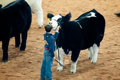 american_royal_cattle-24