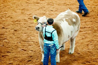 american_royal_cattle-23