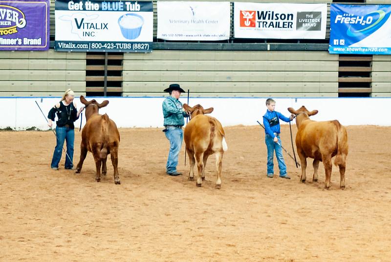 american_royal_cattle-12