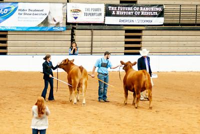 american_royal_cattle-13