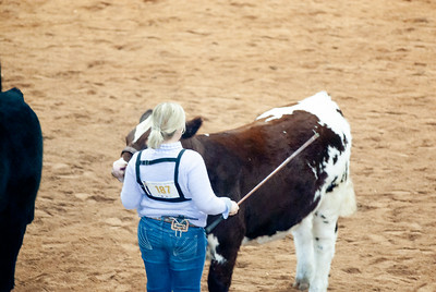 american_royal_cattle-22