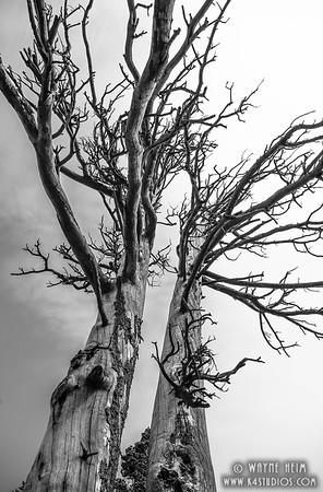 Giants -- Black & White Photography by Wayne Heim