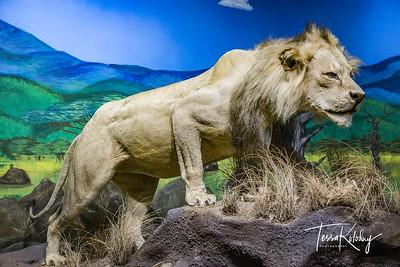 Bandera Natural History Museum-3750