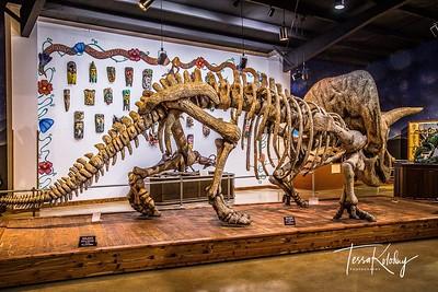 Bandera Natural History Museum-3745