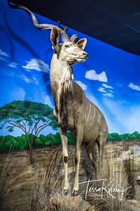 Bandera Natural History Museum-3746