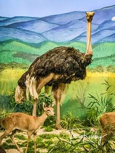 Bandera Natural History Museum_2571