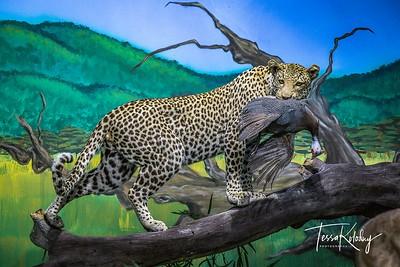 Bandera Natural History Museum-3749