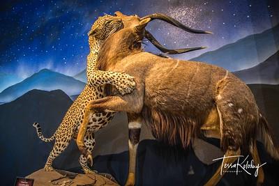 Bandera Natural History Museum-3742