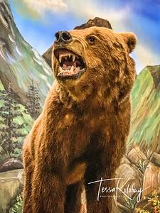 Bandera Natural History Museum_2582