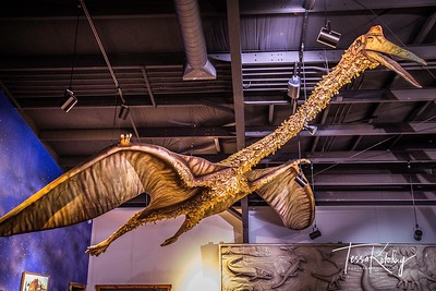 Bandera Natural History Museum-3777